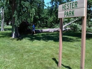 St. Cloud Mayor Dave Kleis surveys storm damage in Hester Park (Photo: Aubrey Immelman)