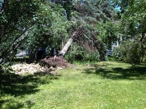 Tree on home near St. Cloud Hospital (Photo: Aubrey Immelman)