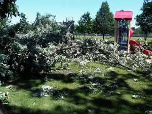 Downed trees in Hester Park (Photo: Aubrey Immelman)